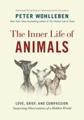 Cover image for Inner Life of Animals